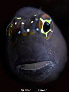 Blenny Poertrait 